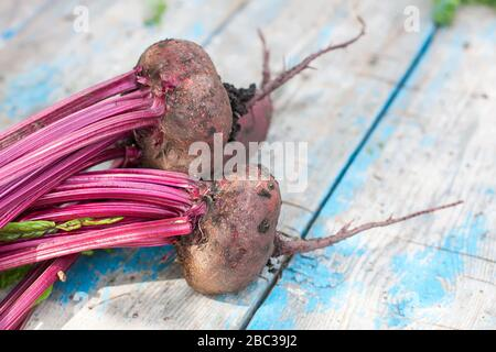 Fresh organic beets  with soil,  with tops on old wooden table, selective focus.  Natural day light. - Stock Photo