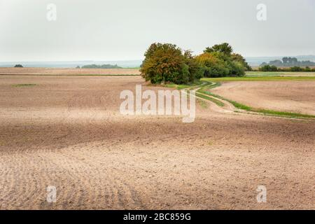 A group of shrubs growing in a plowed field and a dirt road, horizon and sky - Stock Photo