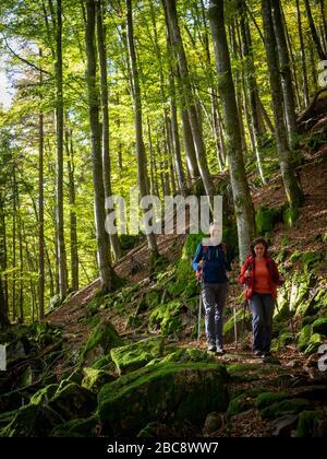 Hiking on the Zweälersteig, Bannwald Zweribach - Stock Photo
