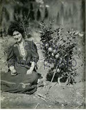 'English: COX'S ORANGE PIPPIN, TWO YEARS OLD. Taken from the work shown, two year old apple tree growing in British Columbia, Canada.; 1909; FRUIT RANCHING IN BRITISH COLUMBIA; BY J. T. BEALBY, M.A.; ' - Stock Photo