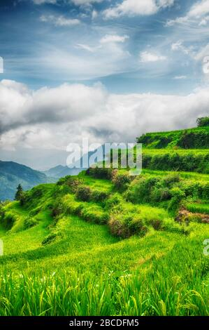 The Yunhe cloud rice terraces landscape in the summer in Zhejiang province China on a sunny day. - Stock Photo