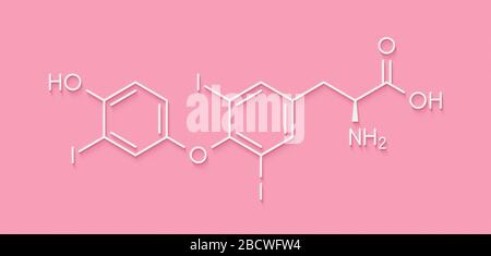 Triiodothyronine (T3, liothyronine) thyroid hormone molecule. Pituitary gland hormone. Also used as drug to treat hypothyroidism. Skeletal formula. - Stock Photo