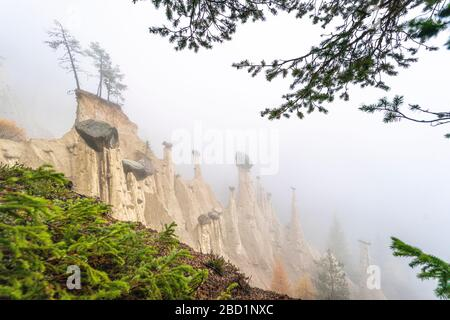 Pine tree branches in the nature park of the Earth Pyramids, Perca (Percha), province of Bolzano, South Tyrol, Italy, Europe