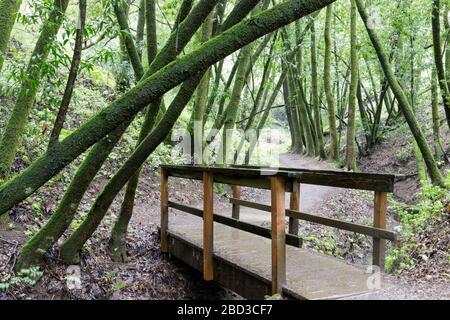 Creek-Crossing Footbridge in Lush Bay Laurel Forest Canyon
