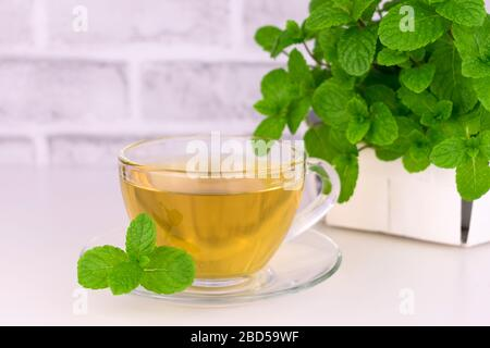 Mint tea in a transparent cup and fresh mint. Mint tea on a white background. Copy space.