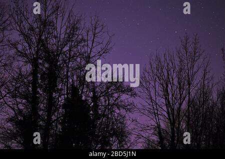 black trees in front of the night sky - Stock Photo