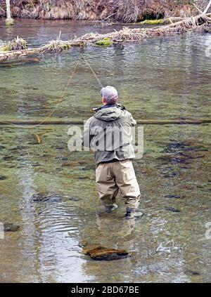 A fly fisherman casts for a rising rainbow trout on the Fall River in Central Oregon in early spring. - Stock Photo