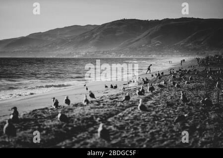 General Views in Back and White of Zuma Beach on 07/09/2019 in Malibu. .Picture by Julie Edwards - Stock Photo