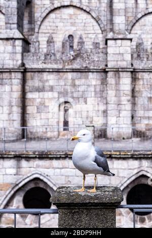 Seagull in the cloister of Sé do Porto Cathedral, Porto, Portugal - Stock Photo