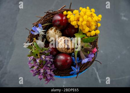 A blue glass bowl filled with colored quail eggs and spring flowers. Easter composition, copy space for text, design.