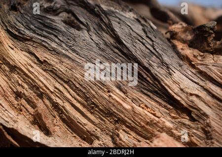 Dry Peeled Tree Bark Texture background Macro Stock Photography Image