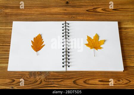 Pressed and dried leaves. Herbarium from leaves on the white album sheets on wooden background. Closeup, selective focus - Stock Photo