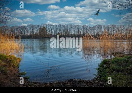above a small lake an eagle flies in the blue sky with white clouds