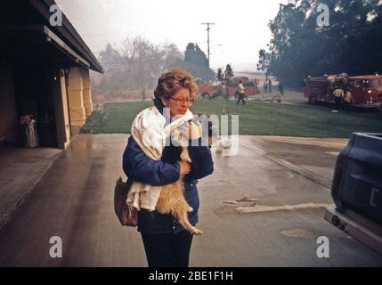A resident flees from a house fire with her dog during the four-day Panorama brush fire, which started in canyons north of town and has been whipped out of control by 40-50 mph winds. - Stock Photo