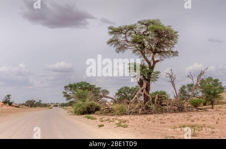 lone tree next to a dirt road