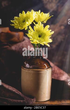 Yellow chrysanthemum flowers in a brown jug on a rustic wooden surface with rays of light shining from above - Stock Photo