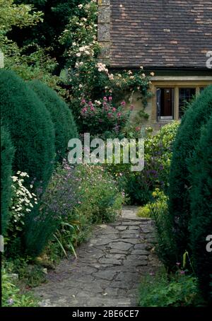 Stone paved path between clipped conifer shrubs in garden of cottage with pink roses on the wall - Stock Photo