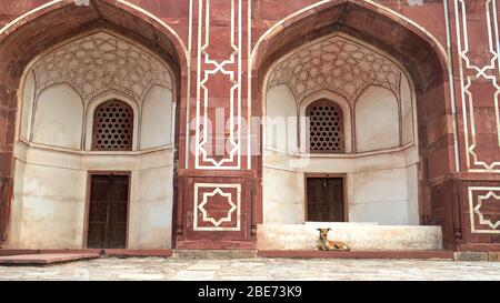 a dog laying on the steps of humayun's tomb in delhi, india - Stock Photo