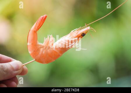 shrimp skewers in hand and nature background / Seafood shelfish Shrimps Prawns - Stock Photo
