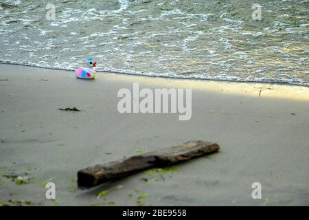 A forgotten toy duck lies on the shore in the waves. Focus on the duckling. A stick lies in the sand. Horizontal.