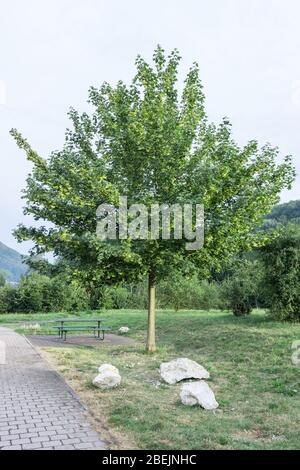 Trees plants grass and greenery in the highway of Rosenheim new autobahn Germany - Stock Photo