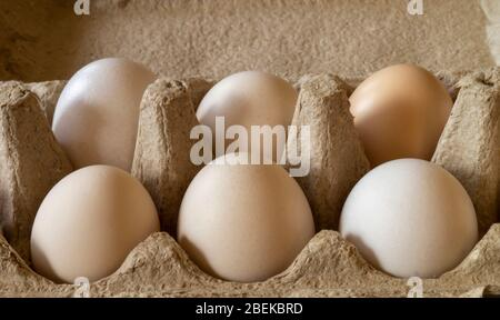 The Chicken egg in sulphur to packing from paperboard. Fresh products of the feeding on gray background