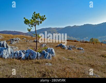 Landscape photography, one lonley tree in the middle of a rocky field, autumn background in the mountains, cold, serene fall colors (taken at 'Campul