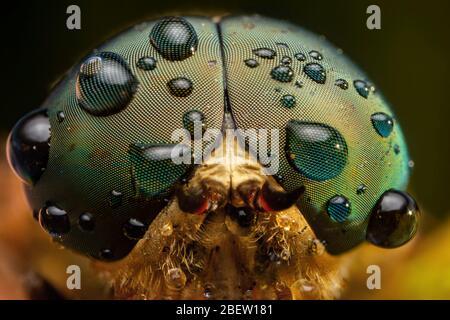 Horse fly close up extreme macro photography - Stock Photo