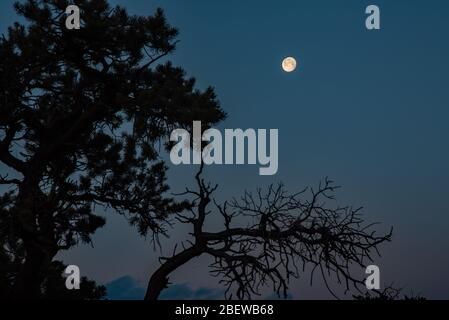Super 'Pink' Moon at night and early morning twilight, over Capitol Reef National Park, Utah, USA. A super moon is when it is closest to the earth. - Stock Photo