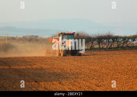 Early into the evening the farmer drives his tractor into the field towing a device for planting this summers crop. - Stock Photo