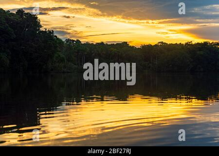 Sunset by a lagoon in the Amazon Rainforest with reflection of the Tree Canopy, Yasuni national park, Ecuador. - Stock Photo