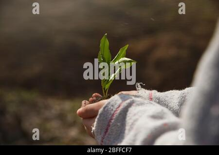 little girl planting young tree, concept save world . young plant in hands outdoors. Ecology concept - Stock Photo