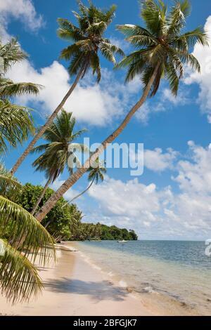Palmenstrand in der Südsee, Pazifik - Stock Photo