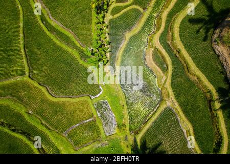 Birds eye view of the Tegallalang / Ceking rice terraces in central Bali, Indonesia - Stock Photo
