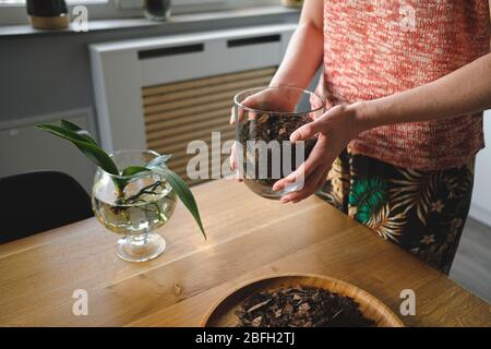 Close up woman hands planting an orchid flower in the house on a wooden desk in the living room