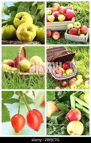 Harvesting collage - Stock Photo