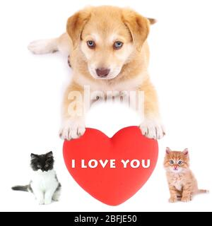 Cute pets with big heart isolated on white - Stock Photo