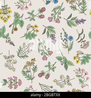 Seamless pattern of various hand drawn herbs and flowers - Stock Photo