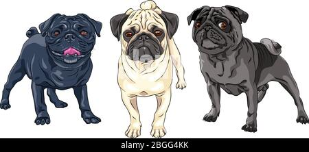 Vector set of cute dogs pug breed black, brown and fawn color - Stock Photo