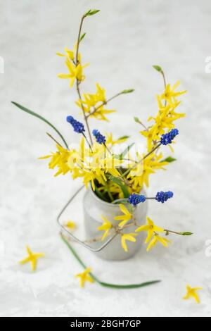 Bouquet of yellow flowers of Forsythia in old vintage aluminium can fallen petals, top view, selective focus. Rustic background - Stock Photo