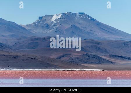 Landscape view of Laguna Colorada,Eduardo Avaroa Andean Fauna National Reserve, Southwest Bolivia