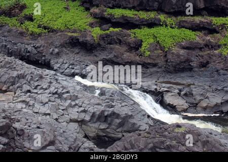 A section of Palikea Stream, Oheo Gulch, Seven Sacred Pools, running through volcani rock with Scaevola taccada plants growing in the rock, Maui, Hawa