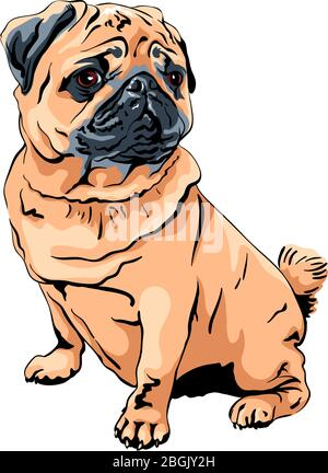 Vector cute dog pug breed apricot fawn color - Stock Photo