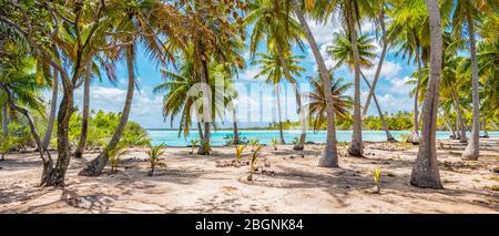 Palm trees on the beach of Fakarava, French Polynesia. Panorama landscape.