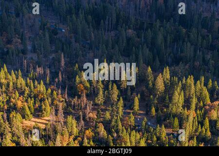 View of Yosemite Valley forest from top sunrise gold light - Stock Photo