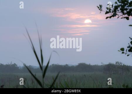 Misty sunrise over Hickling broad marshes- Hickling broad, July 2017