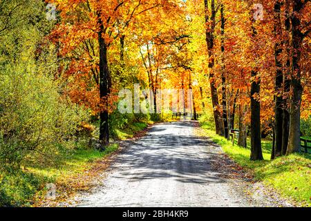Entrance street gravel dirt road during orange red autumn in rural countryside in northern Virginia with trees lining path in vibrant foliage neighbor - Stock Photo