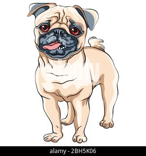 Vector cute dog pug breed fawn color - Stock Photo