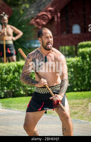 A Maori warrior performs the haka as part of a traditional welcoming ceremony at Te Puia, Rotorua, North Island, New Zealand - Stock Photo