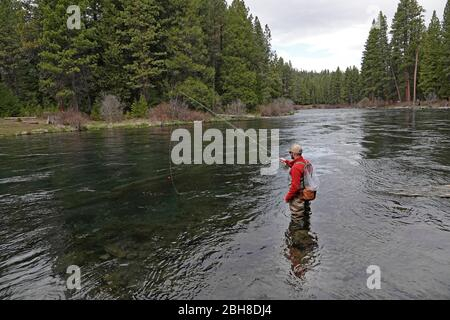 An angler casts for rainbow trout on the Metolius River in central Oregon's Cascade Mountains near the small town of Camp Sherman, Oregon. - Stock Photo